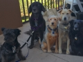 flat-pets-outside-lunch-black-dogs-blogpaws-2014