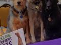 flat-pets-petfinder-blogpaws-2014