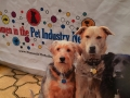 flat-pets-women-in-pet-industsry-blogpaws-2014