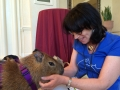 susan-capybara-blogpaws-2014