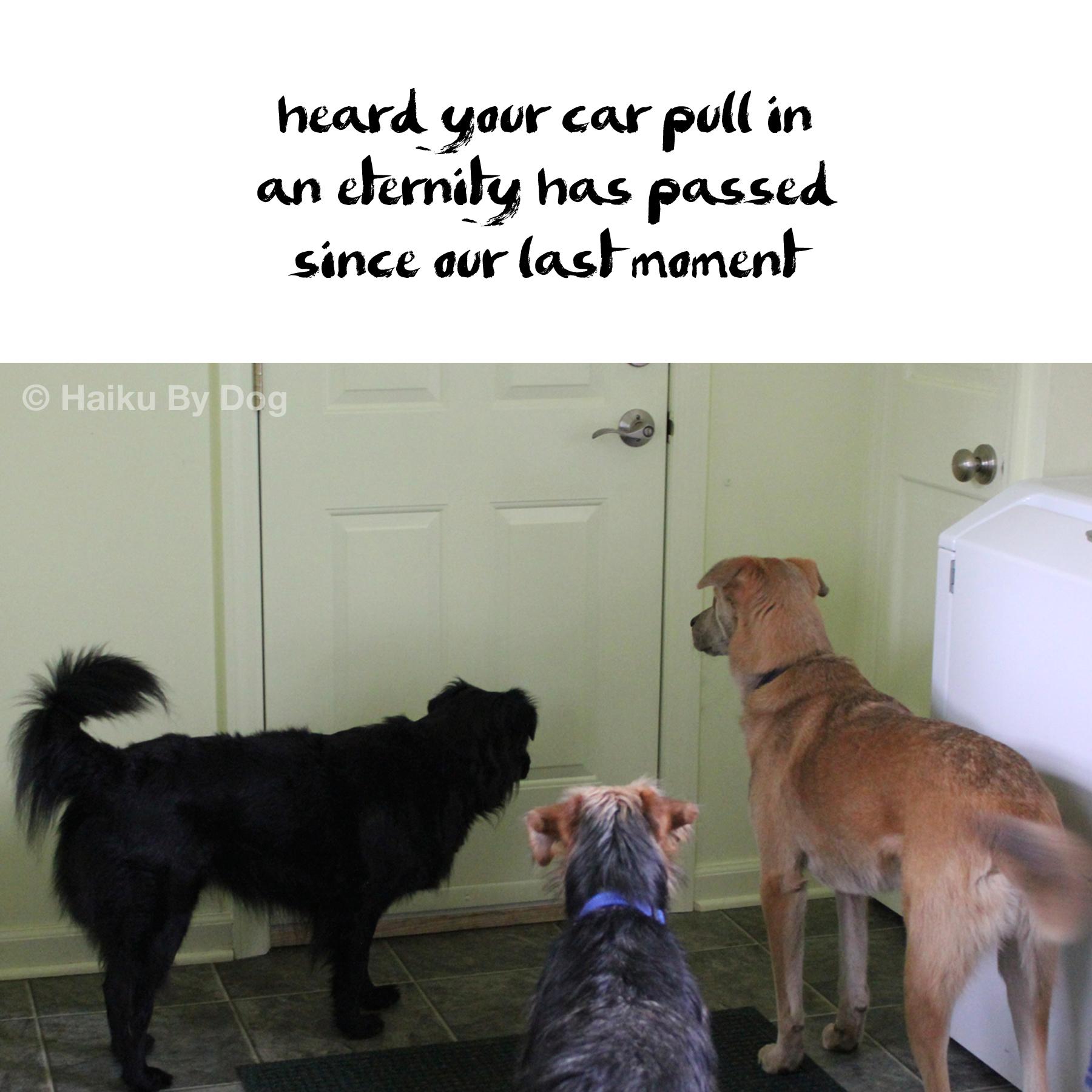 3 dogs eternity at door