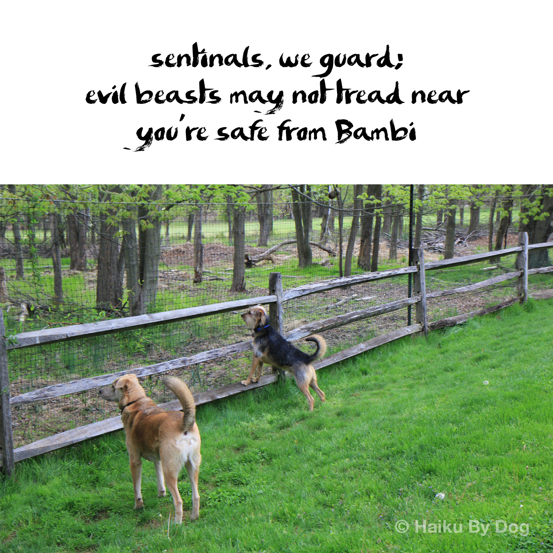 sentinels, we guard / evil beasts may not tread near / you're safe from Bambi