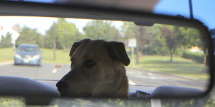 Dog-friendly Subaru funds research to keep your dog safe