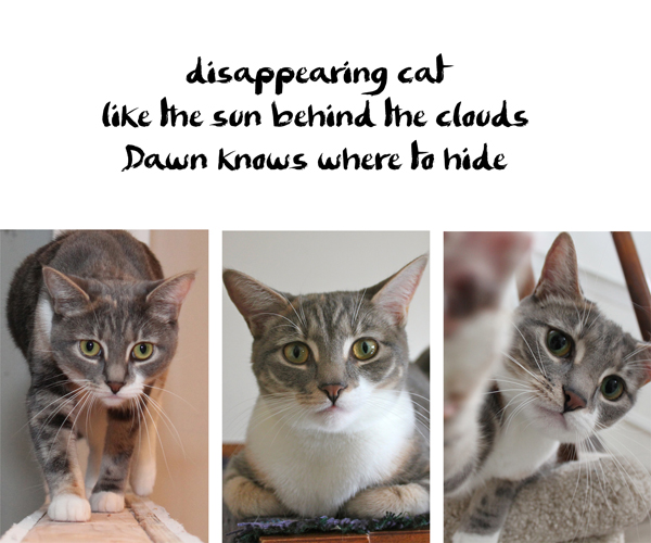 Haiku by Dawn: disappearing cat / like the sun behind the clouds / Dawn knows where to hide