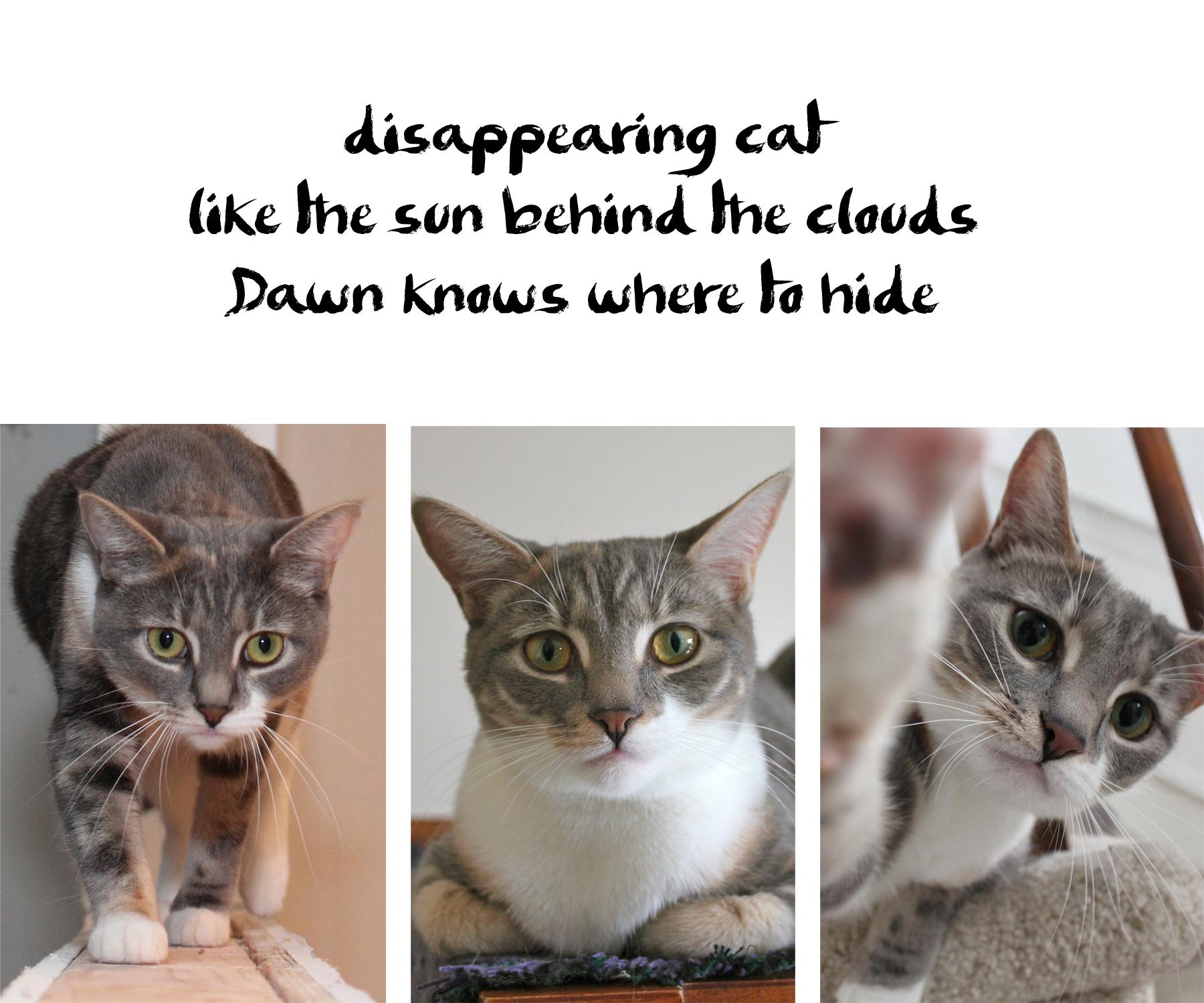 3 Dawns haiku