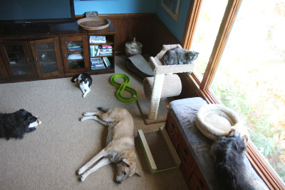 The calm before the storm. Three dogs and two cats hanging out.