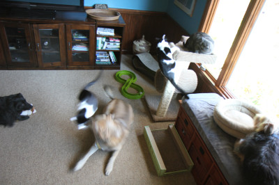 Three dogs and three cats: chaos