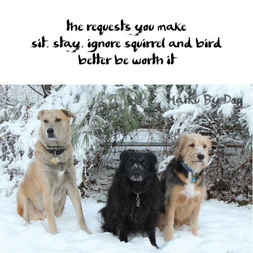 the requests you make sit. stay. ignore squirrel and bird better be worth it