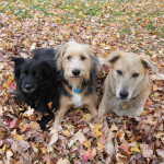 Dogs and leaves: a fall portrait