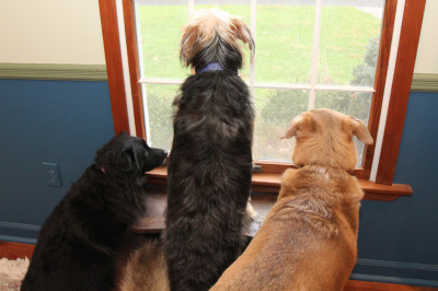 Dogs on the lookout for visitors.