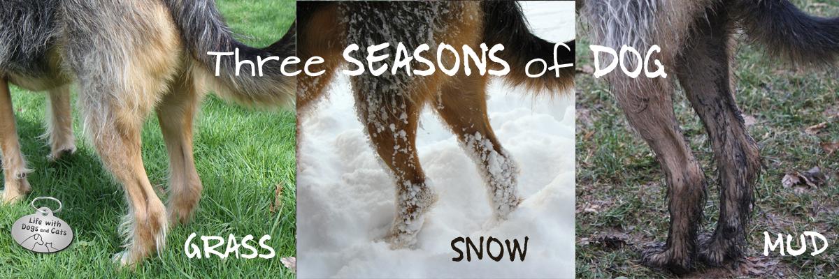 3 seasons dog