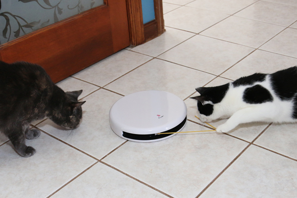 Two cats play with FroliCat FLIK electronic cat teaser