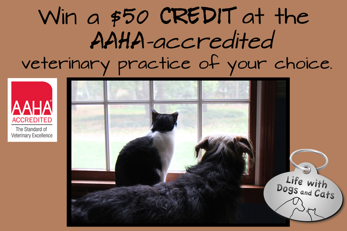 AAHA credit sweepstakes horizontal Life with Dogs and Cats