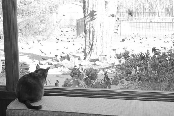 Sat watching birds