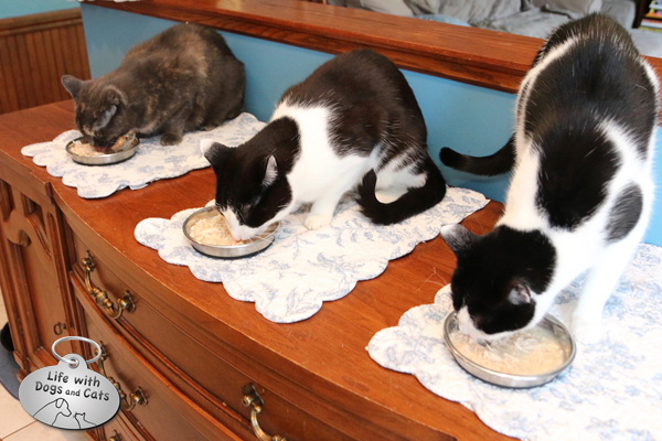 While some cats are stressed when eating in close proximity to each other, mine feel comfortable as long as each has his or her own placemat — a way to own territory.