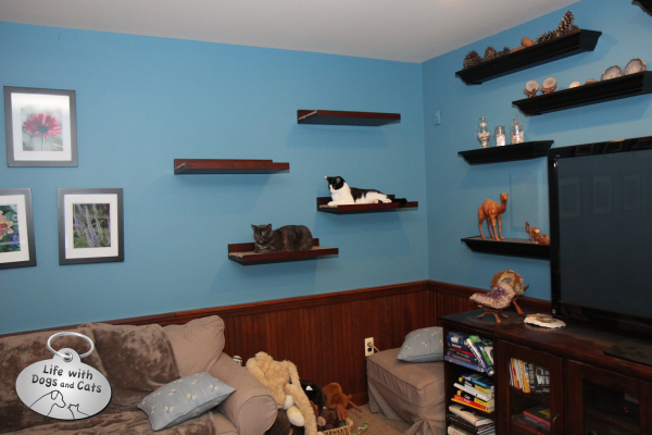 Blue Walls, Cat Shelves make cats happy