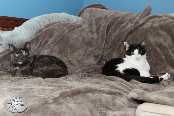 Athena and Calvin practice synchronized sleeping in preparation for the Cat Sleeping Olympics.