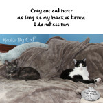 Haiku By Cat: Only