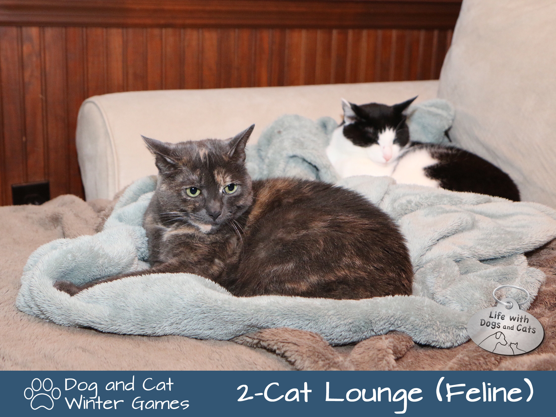 Dog and Cat Winter Games: Two-cat lounge