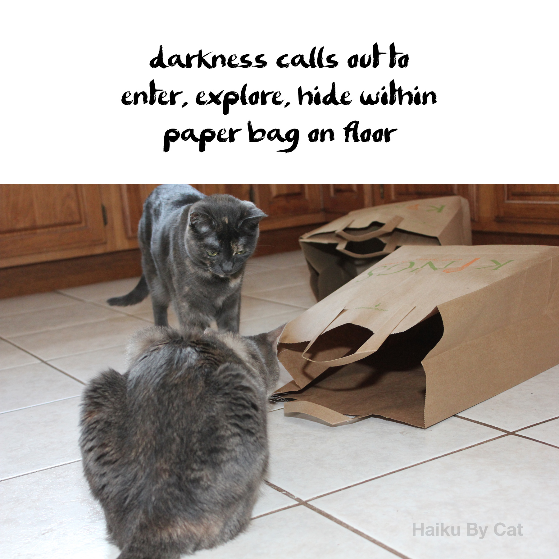 Haiku by Cat: darkness calls out to / enter, explore, hide within / paper bag on floor