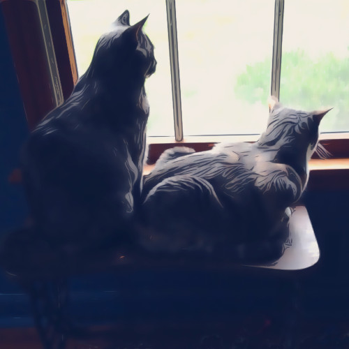 Two cats watch out a window