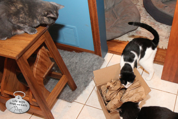 Reasons cats love boxes: There's enough for everyone.