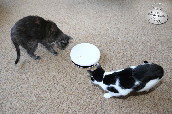 Athena and Elsa Clair play with their new electronic toy