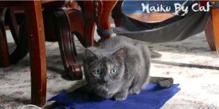 Haiku by Cat: Intend