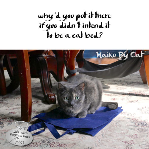 why'd you put it there / if you didn't intend it / to be a cat bed? #HaikuByCat #Haikusday