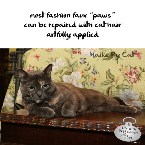 Haiku by Cat: most fashion faux paws / can be repaired with cat hair / artfully applied