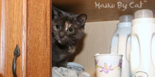 Haiku By Cat: Infraction