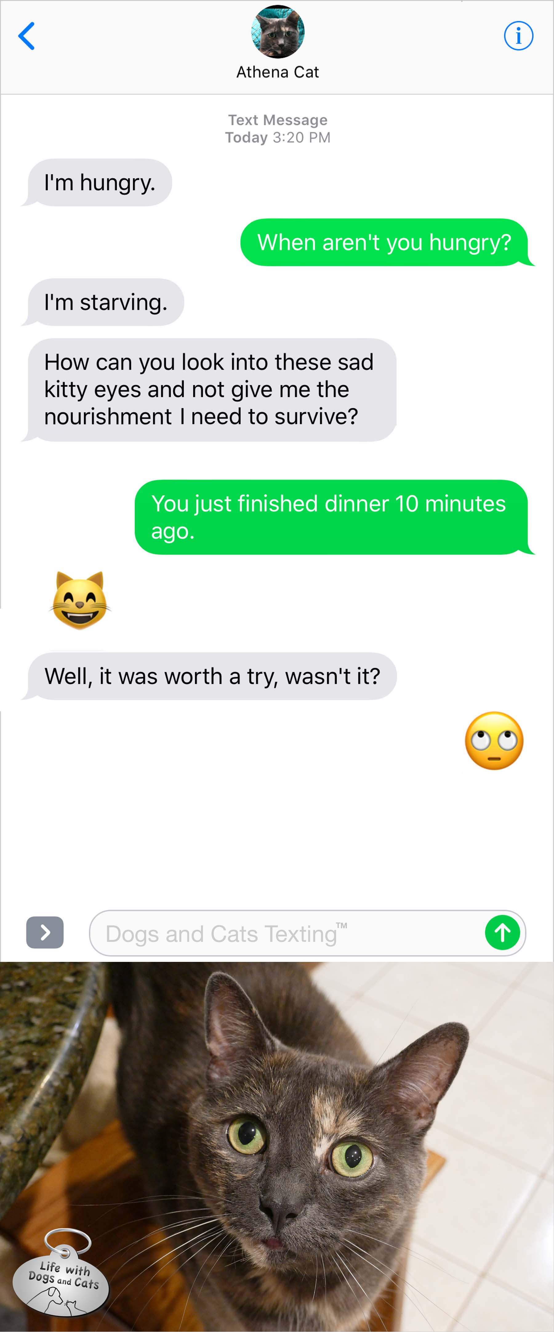 #TextFromCat I'm hungry. Me: When aren't you hungry? Cat: I'm starving. How can you look into these sad kitty eyes and not give me the nourishment I need to survive. Me: You just finished dinner 10 minutes ago.