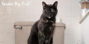 Haiku By Cat: Throne