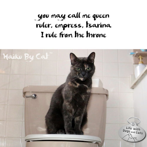Haiku By Cat: you may call me queen / ruler, empress, tsarina / I rule from the throne