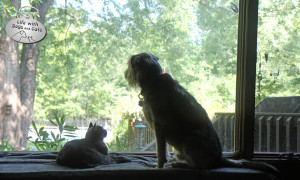 Story: Dogs and cats living together