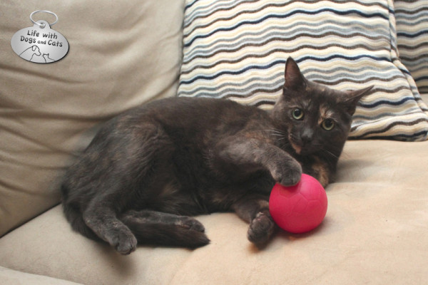 World Cat Day activity: having a ball--the dog's ball in particular
