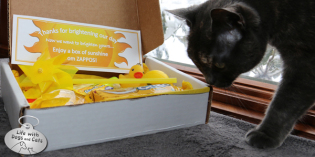 Zappos Delivers a Box of Sunshine