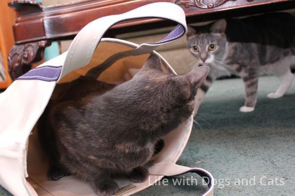 Athena bag living room, Dawn watching