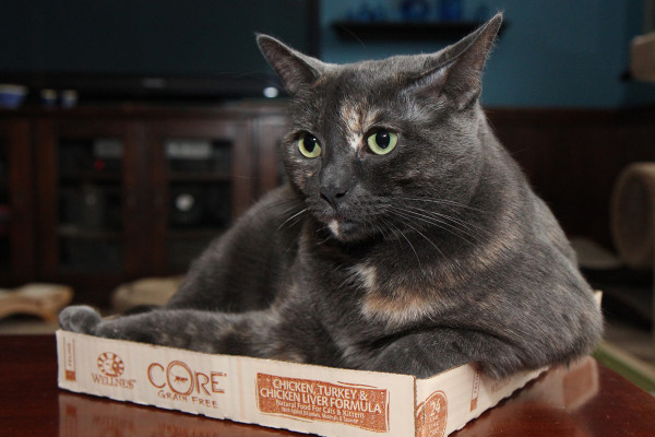 Cat in a short box