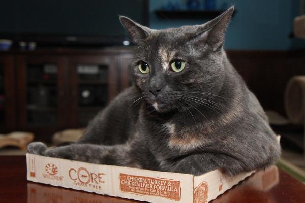 Cat in a short box