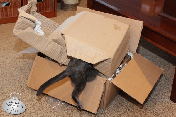 Reasons cats love boxes: They're easy to get into.