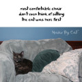 Haiku by Cat: most comfortable chair / don't even think of sitting / the cat was here first