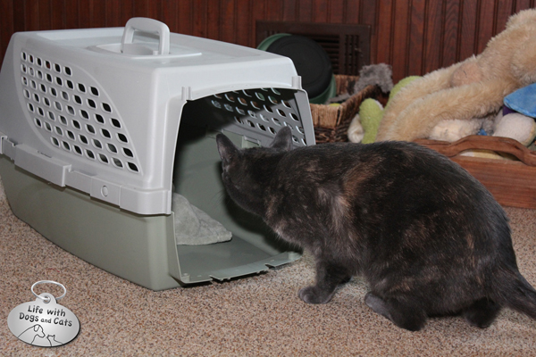 Athena inspects a crate