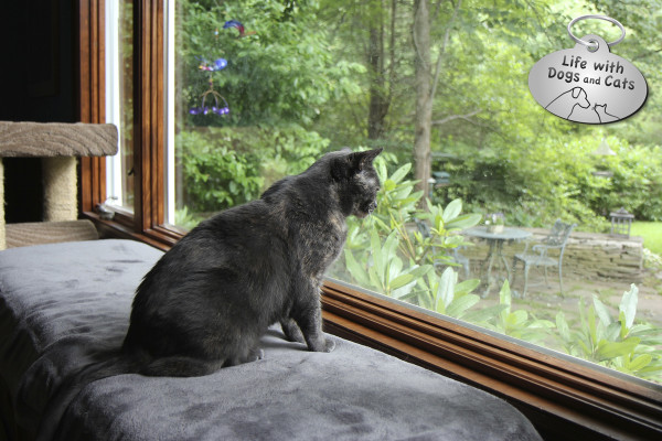 World Cat Day activity: bird watching.