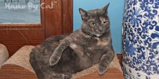 Haiku by Cat: Splendor