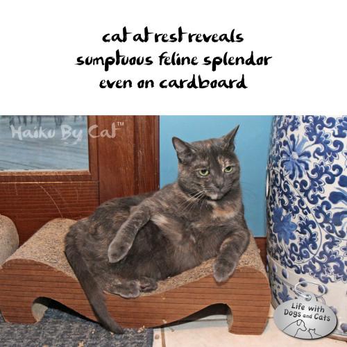 Haiku by Cat: cat at rest reveals / sumptuous feline splendor / even on cardboard