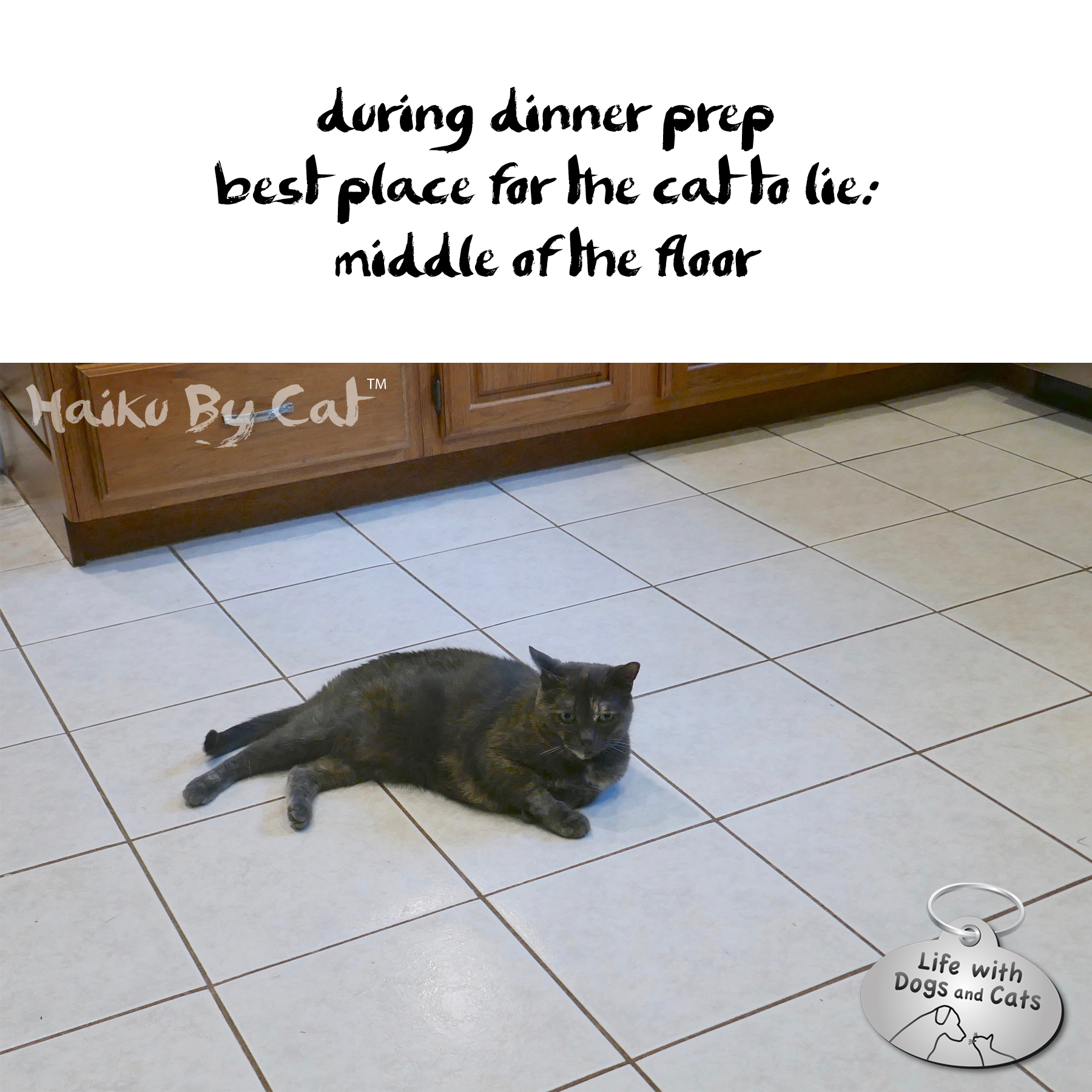 during dinner prep / best place for the cat to lie: / middle of the floor