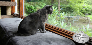 Haiku by Cat: Birdwatching