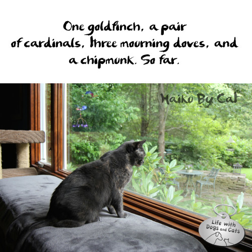 Haiku by Cat: One goldfinch, a pair / of cardinals, three mourning doves, and / a chipmunk. So far.