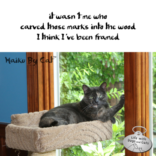 Haiku by Cat: it wasn't me who / carved those marks into the wood I / think I've been framed